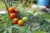 Agricultura ecológica: ¿Mercado local o exportación?