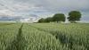 ¿Trabajar en el campo? Las labores agrícolas más habituales
